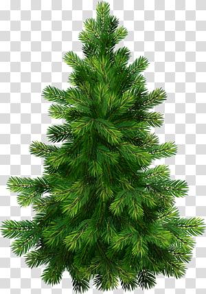 Pinheiro, pinheiro, ilustração de árvore de Natal verde PNG clipart