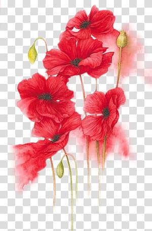 Pintura em aquarela de flor laranja, vermelha e amarela, ilustração de flores vermelhas pintadas à mão, pintura de flores com pétalas vermelhas PNG clipart