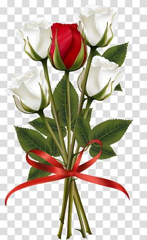 Buquê de flores Rose vermelho, branco e vermelho Rose Bouquet, ilustração de buquê de rosas brancas e vermelhas png