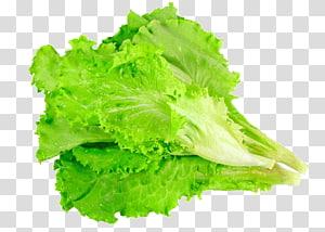 alface vegetal, alface romana, alface deixa legumes png
