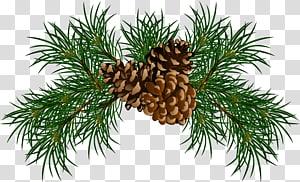 Ramo de cone de coníferas de pinheiro, ramos de pinheiro com pinhas, ilustração de pinha marrom PNG clipart