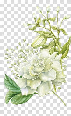 Pintura em aquarela Design floral Flor, Pintados à mão flores em aquarela, pintura com flores rosa branca PNG clipart