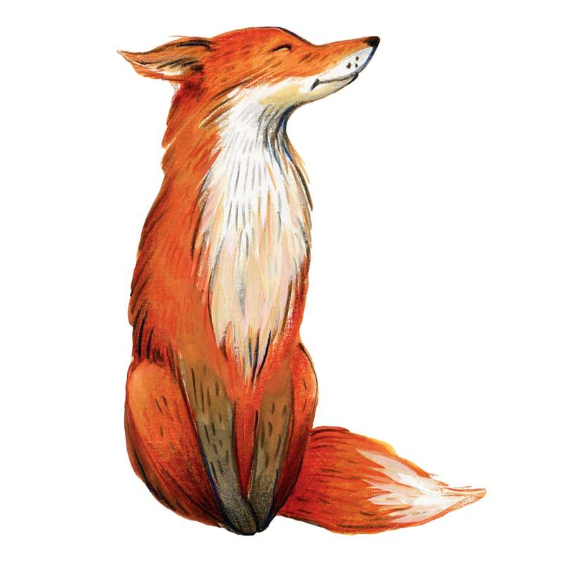 pintura em aquarela de raposa vermelha e cinza, raposa png