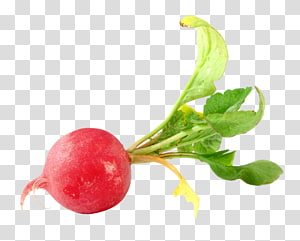 ilustração de beterraba vermelha, beterraba de alimentos vegetais de Daikon, rabanete PNG clipart
