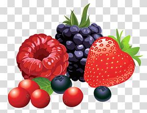 Ilustração de frutos silvestres, frutos da floresta, framboesa, morango e amora png