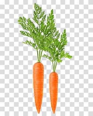 duas cenouras, colheitadeira de cenoura Alimentos vegetais de folhas, cenouras legumes PNG clipart