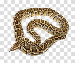 cobra marrom, cobra python, cobra PNG clipart