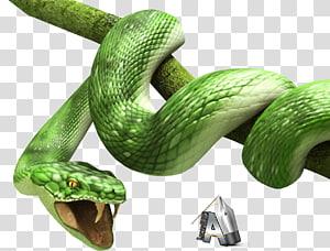 Cobra, 3d PNG clipart