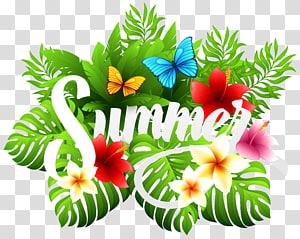 Verão, verão decorativo, ilustração de folhas verdes png
