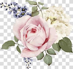 Rose Painting illustration Flor, rosa rosa e rosa branca aquarela pintados à mão ilustração de flores, rosa, branco e azul flores ilustração png