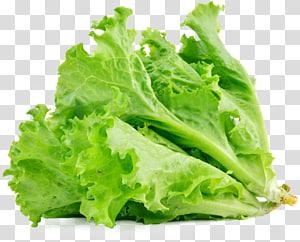 foco seletivo de alface, sanduíche de alface alface Butterhead Salada de legumes Alimentos, alface png