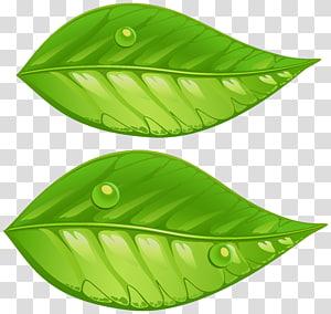duas folhas verdes, folhas verdes, folhas verdes PNG clipart