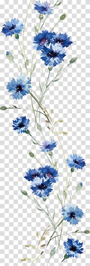 Decalque em parede de flor, orquídea em aquarela, pintura azul de flores png