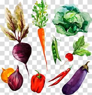 Ilustração de legumes variados, Pintura em aquarela Ilustração de desenho de legumes, Vegetais pintados à mão PNG clipart