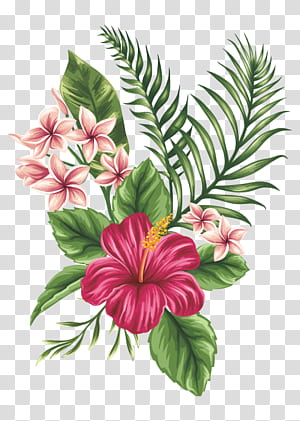 Desenho Esboço da flor, flores pintadas à mão, pintura de flor de hibisco vermelho PNG clipart