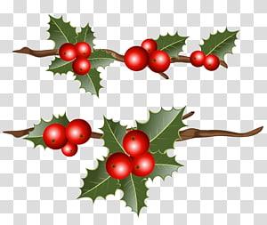 adesivo de visco, azevinho comum Natal visco, ramos de azevinho png