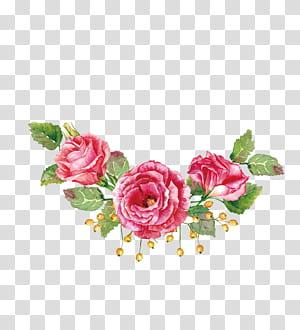 Buquê de flores Pintura em aquarela Rosa de praia, material de rosas em aquarela, três flores de pétalas vermelhas png