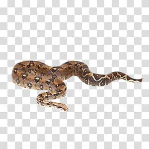 cobra python, réptil cobra Boa constrictor imperator Python reticulada Boas, cobra PNG clipart