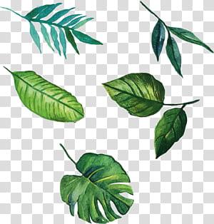 Folha euclidiana, folhas pintadas à mão, ilustração de cinco folhas verdes PNG clipart