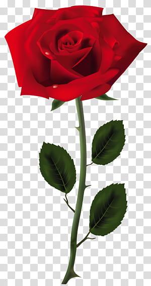 Rose, Red Rose Art, ilustração de rosa vermelha PNG clipart