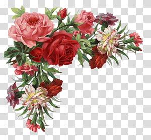 Flor rosa roupas Vintage, borda rosa, ilustração de flores rosa vermelha e rosa png