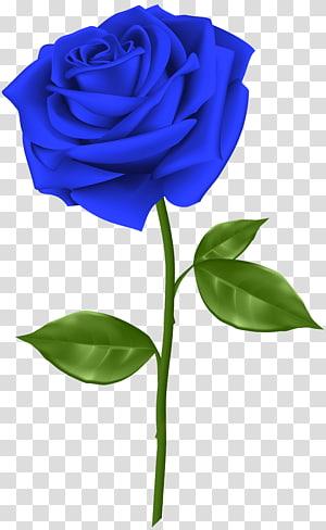 ilustração de rosa azul, rosa azul flor, rosa azul PNG clipart