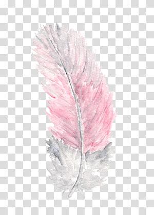 arte de pena branca e cor-de-rosa, pena pintura da aguarela flores da aguarela, pena png