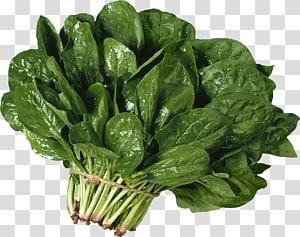 vegetais de folhas verdes, tecido de vegetais de acelga de folhas de espinafre, salada png