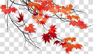 folhas de bordo vermelho ilustração, cor de folha de outono Maple leaf, folhas de outono PNG clipart