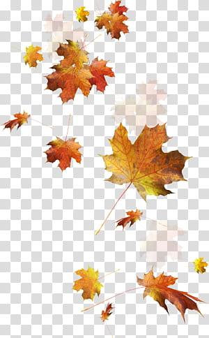 Folhas de outono cor da folha de outono, folhas caindo, folhas secas PNG clipart